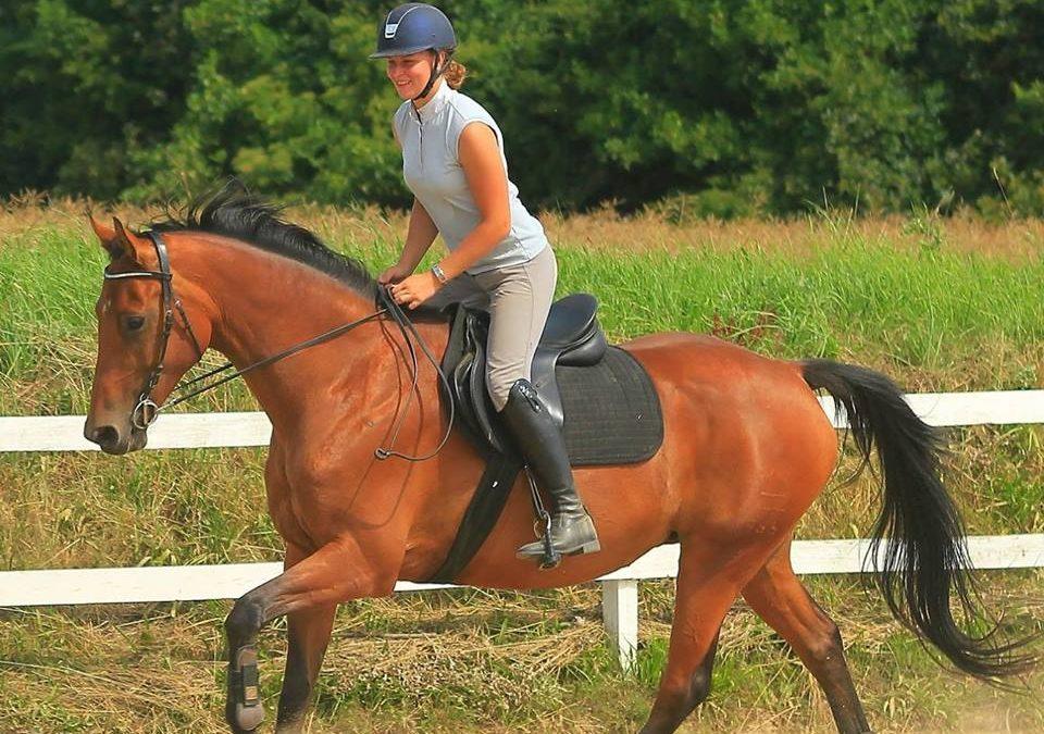 Sådan forbedre du hestens trav ved at galopere