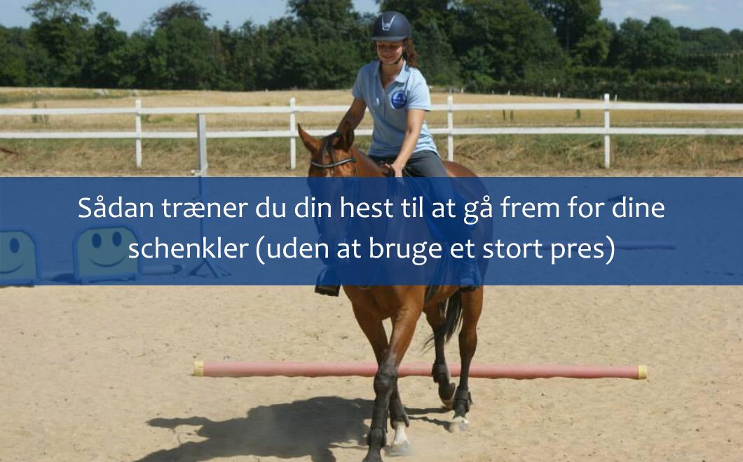 Sådan træner du din hest til at gå frem for dine schenkler (uden at bruge et stort pres)
