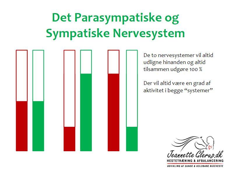 Forstå Hestens Nervesystem og Træn Med Mindre Stress