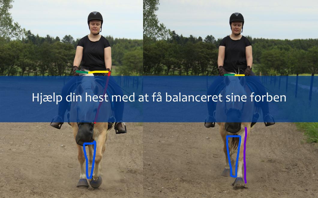 Hjælp din hest med at få balanceret sine forben